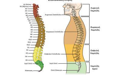 Ανατομία-παθολογία σπονδυλικής στήλης και δίσκων
